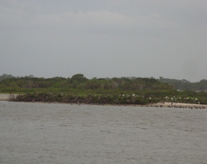 View from the deck: small wildlife sanctuary island