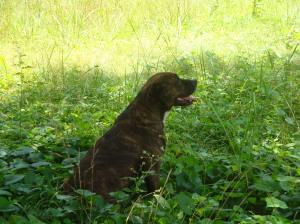 Kara's beautiful dog, Dodger