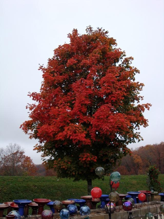 Beautiful tree outside Country Barn