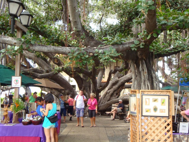 The Banyan Park Tree