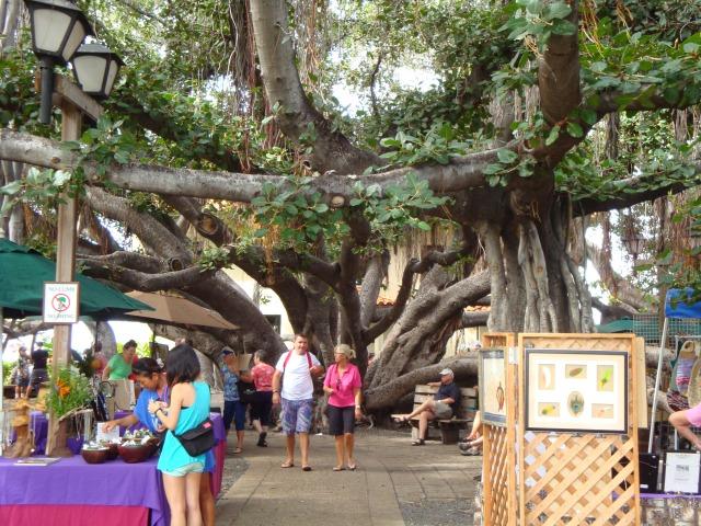 The Banyan Park Tree