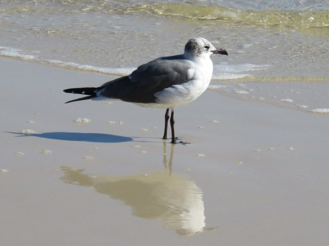 Reflection of a seagull in the surf